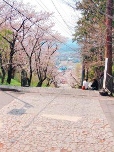 東山公園の桜 4/15撮影